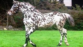 10 Самых Необычных Лошадей, в Существование Которых Вы Не Поверите