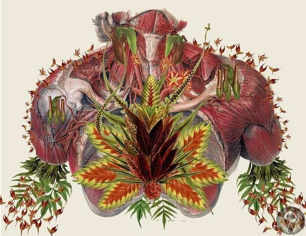 Может ли наука сказать, как надо жить Аборигены с острова Добу около Папуа Новой Гвинеи живут в атмосфере постоянного страха и подозрительности. В этой культуре твой ближайший родственник может