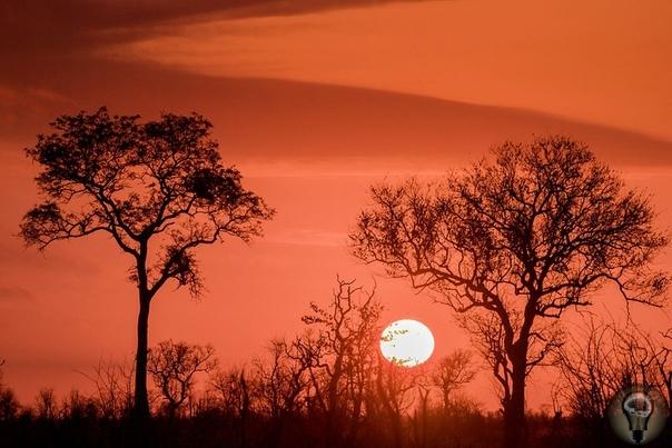 БОЛЬШОЕ ПУТЕШЕСТВИЕ: ПОКА ОГОНЬ ГОРИТ Африка колыбель человечества. Жители ее юга миллион лет назад приручили огонь и обрели защиту от зверей, темноты, одиночества и голода. Брай, традиция