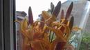 Букет лилий и банка капусты на окне