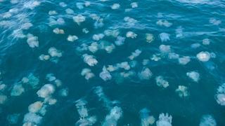Медузы атаковали побережье Азовского моря в Запорожье