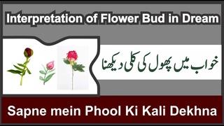 Interpretation of Flower Bud in Dream    Khwab mein Phool kI Kali Dekhna    خواب میں کلی کی تعبیر