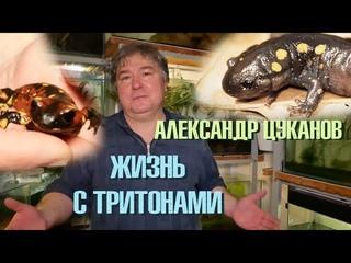 Гуляем по коллекции КРУТЕЙШИХ тритонов!