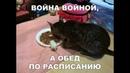 Веселые картинки. Приколы про котов самые смешные.
