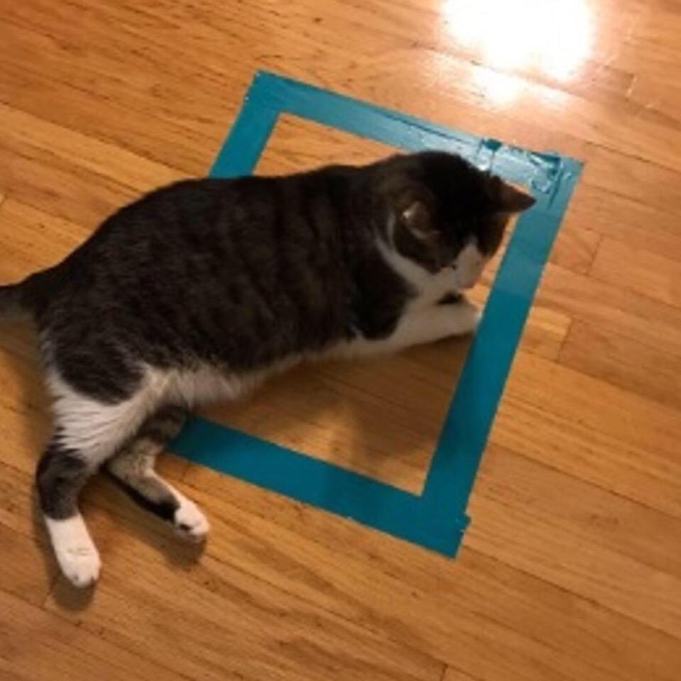 stO nEwnRbI - Новая фишка для котов