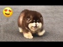 Happ bouncy bois