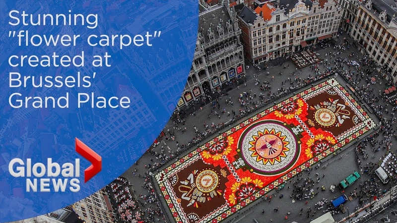 Massive flower carpet blossoms in Brussels' iconic Grand Place