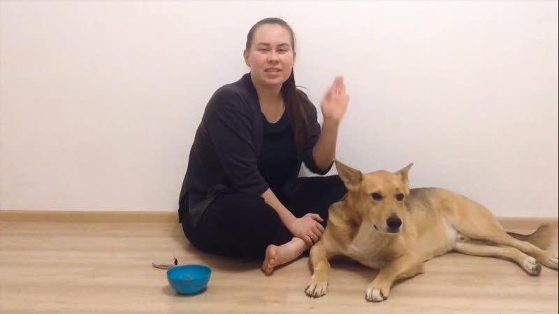 Как приучить взрослую собаку или щенка стричь когти ✔Приучаем к когтерезу!