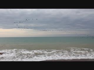 Зимнее Чёрное море и стая неизвестных птиц