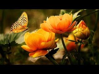 Чудесно и Красиво для души!!!  Неземная Музыка Сергея Чекалина уносит вдаль к мечтам... Моя любовь