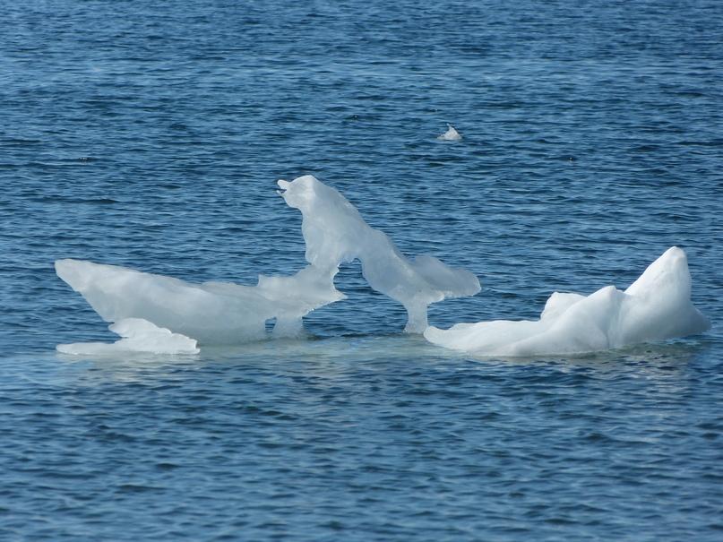 Амдерминский ледяной пес