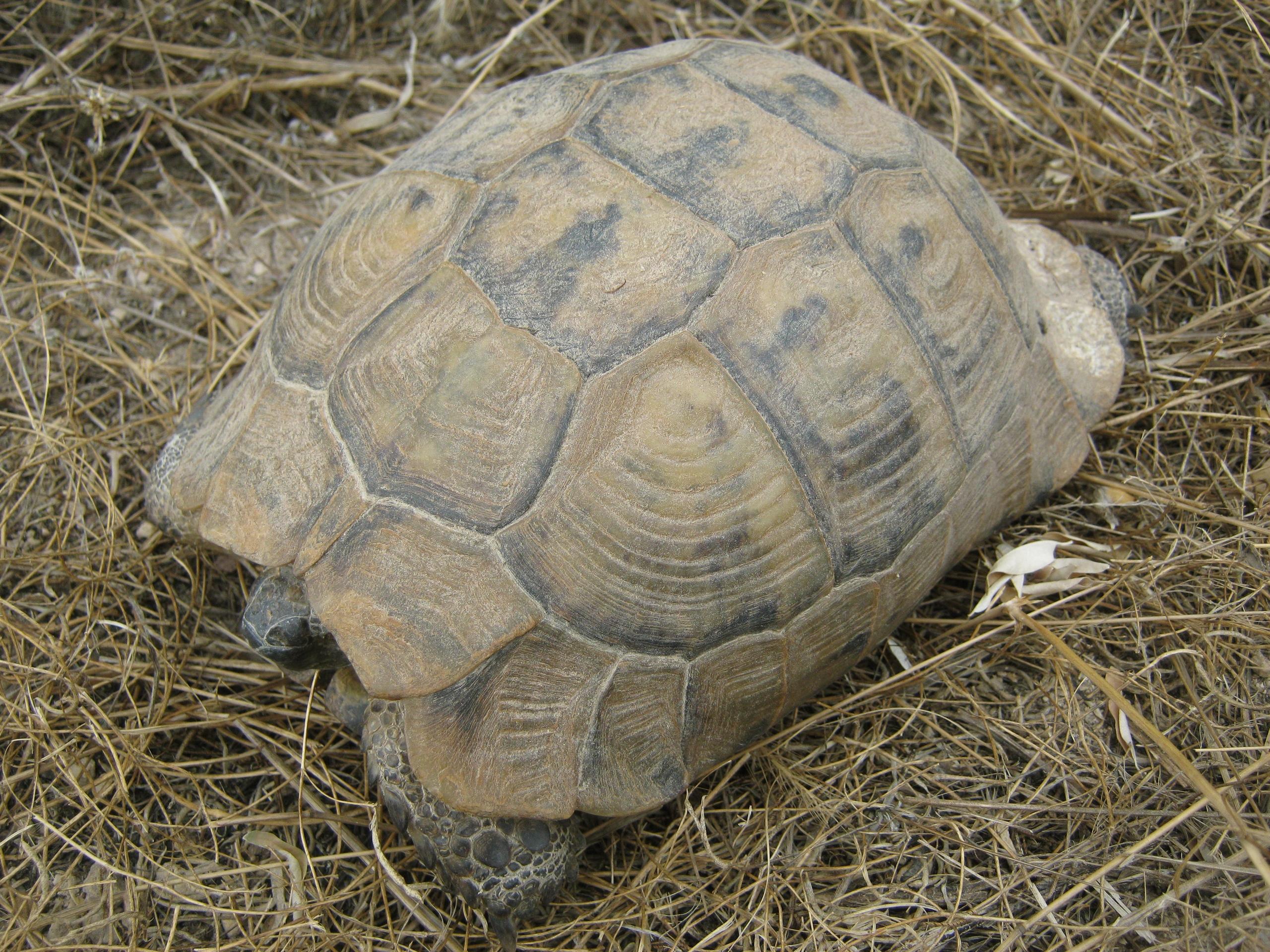 дикие черепахи и животные в Каппадокии