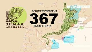 """""""Великое переселение"""" краснокнижных кошек: дальневосточным леопардам стало тесно в Приморье"""