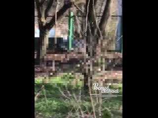 Пара в парке в Таганроге занялась непотребством  Ростов-на-Дону Главный