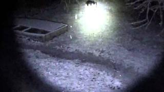 защитит ли фонарь в режиме стробоскопа от собаки?