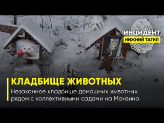 Незаконное кладбище домашних животных Нижний Тагил