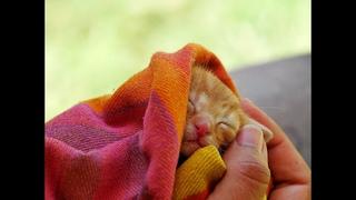 1 июня Международный День Защиты Детей. Поздравление для детей! Животные и их милые малыши