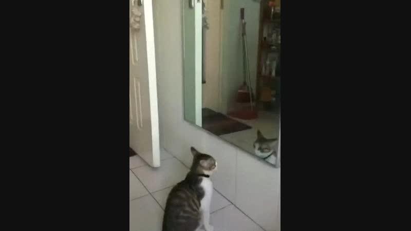 Yaplakal.com, [21.10.18 22:50] [ GIF ] Порхай как бабочка, жаль что ты кот.