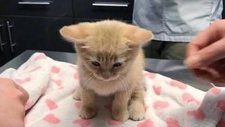 Забитый котенок прижал уши, боясь посмотреть на людей