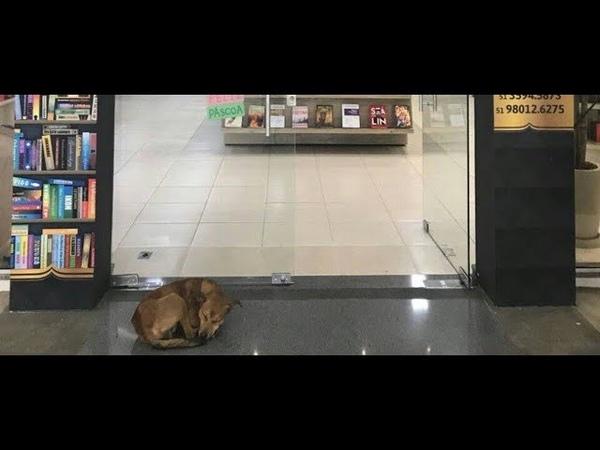 Видео Cachorro tenta roubar livro de Elena Ferrante e viraliza na web смотреть онлайн
