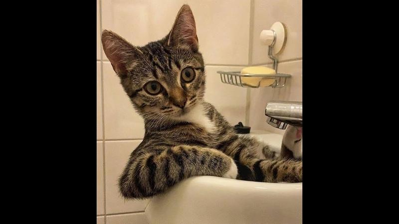 Сногсшибательно смешные кошки Подборка приколов с котами кошками и котятами
