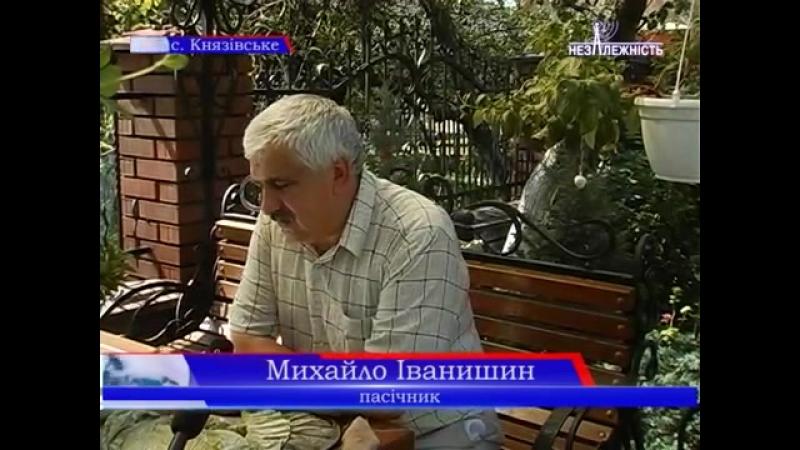Секрети успішного пасічництва на Рожнятівщині