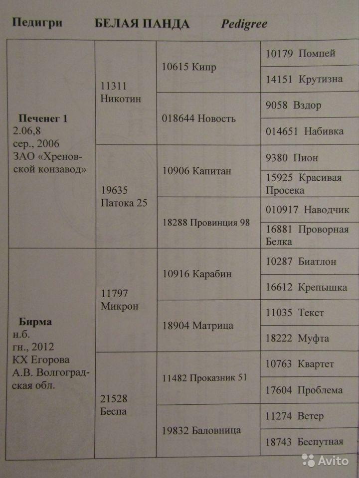 Y-LozOJId74.jpg