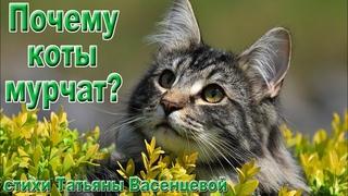 «Почему коты мурчат?» - описание и особенности домашних кошек.