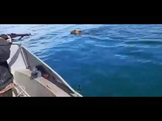 На Байкале охотники с лодки в упор расстреляли медведя
