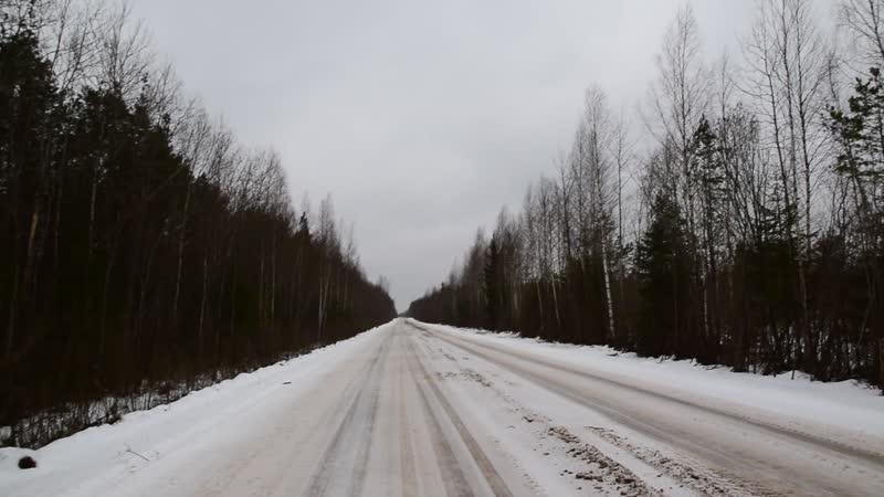 Захожская дорога, Рысинское болото, ЮЗ ветер шумит по верхам леса, 16.02.2020, 1452 (мск)