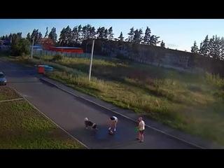 Бродячая собака загрызла домашнюю. С.Ямное Рамонский р-н, Воронежская обл.
