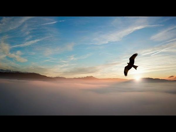 Пение птиц в лесу Лечение птичьим щебетом
