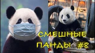 Смешные ПАНДЫ #8 / Лучшие приколы 2021 / Funny PANDA.