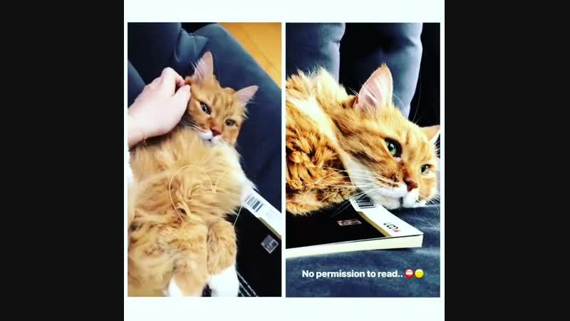 Fahriye ve kedisi 😍 story Hayvan dostlarımızın insanlardan daha vefalı ve sevgi dolu oldukları kesin 🙏🏻😻🐈 @evcenf