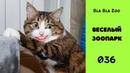 Говорящие коты / Приколы с животными / Подборка 036