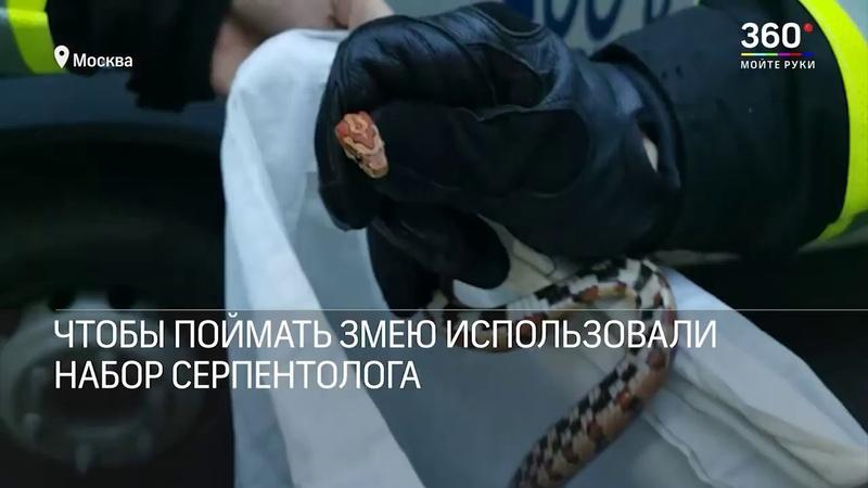 Спасатели поймали змею которая заползла в квартиру на юго западе Москвы
