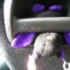 Мышь Летучая