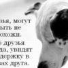 Moi Druzya