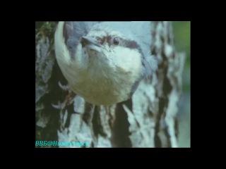 BBC Живая планета Портрет Земли 03 Северные леса Документальный 1984