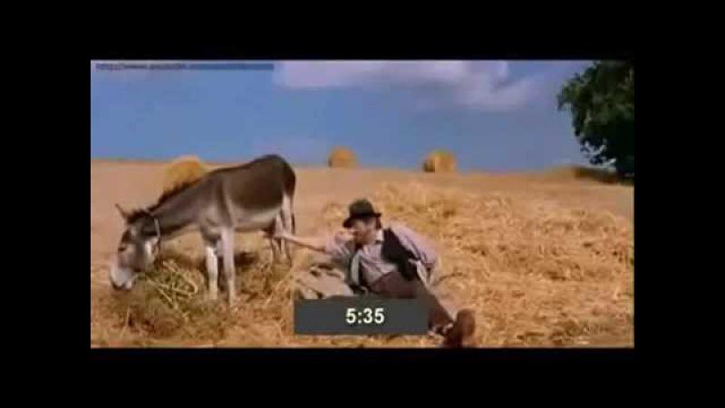 Прикол. Как по яйцам осла определить время.Funny. How to verify time with donkey testicles.