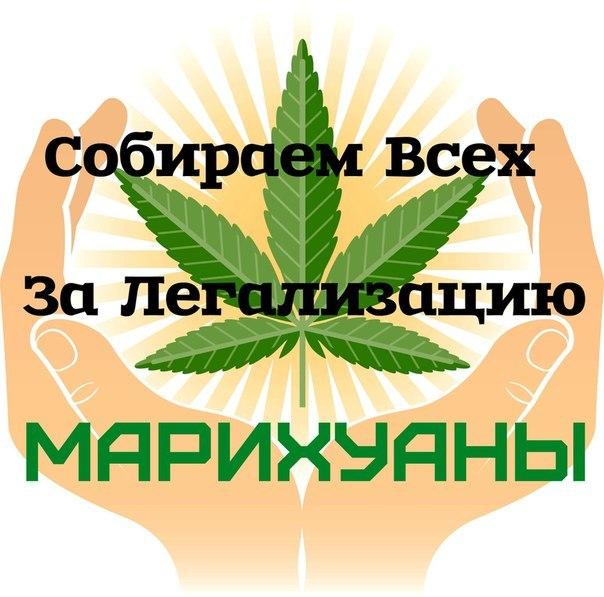Легализация марихуаны в россии за купить семена афганки с высоким тгк почтой