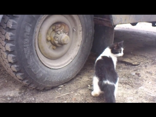 Том и джерри tired of playing cat and mouse