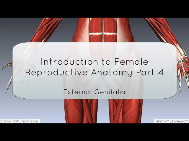 Introduction to Female Reproductive Anatomy Part 4 External Genitalia 3D Anatomy Tutorial