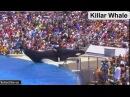 SHAMU Seaworld Killer Whale show 2016 | Seaworld Orca | Killer Whale Attack In Seaworld