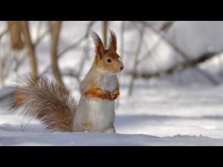 Как белка зимует? Детям про животных.