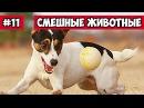 Уморительная собака кот и пылесос эти смешные животные 11 Bazuzu Video ТОП подборка