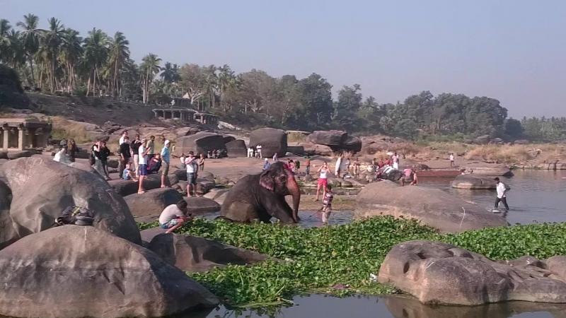 Купание слона из темпла в Хампи