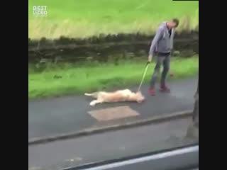 Кажется у вас собака сломалась