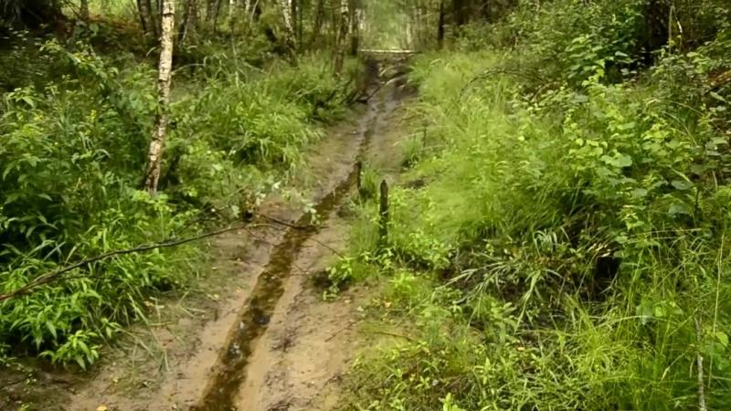 прогулка по лесу .дождь природа , земля, Беларусь