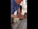 Abdest Alırken Yanına Gelen Susamış Kediye Elleriyle Su İçiren Koca Yürekli Amcamız